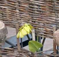 Делаем плетень своими руками: фото, видео