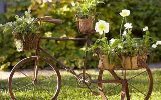 Сделайте свой сад красивым и привлекательным