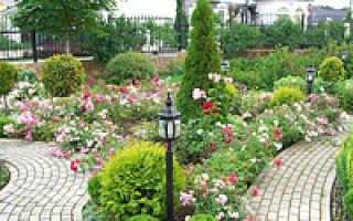 Красивый бордюр — элемент ландшафтного дизайна в саду