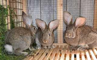 Чертежи клеток из сетки для кроликов