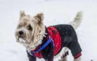 Как сделать собаку: 110 фото и схемы изготовления своими руками собак разных пород