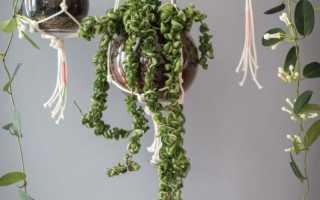 Подвесной горшок для цветов своими руками (фото, пошагово, мастер-класс)